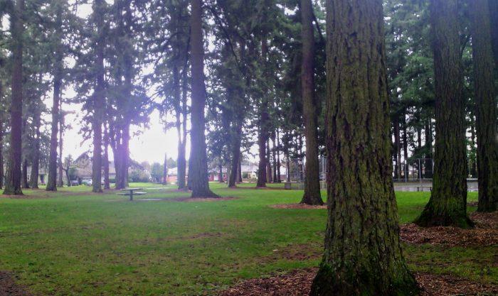 park with Doug firs on an overcast day