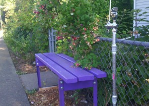 bus stop with homemade purple bench, water fountain, and raspberry canes