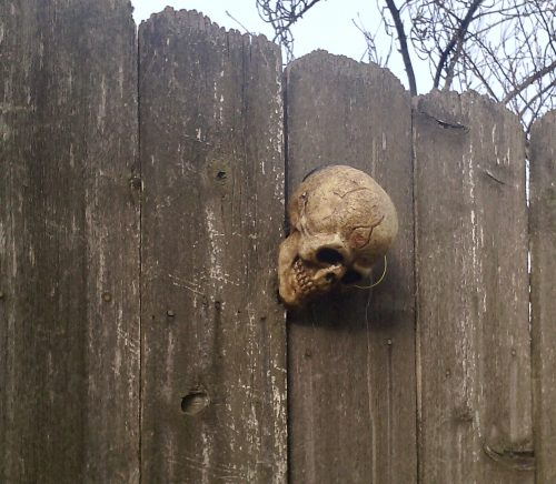 weathered board fence with a plastic skull mounted on it