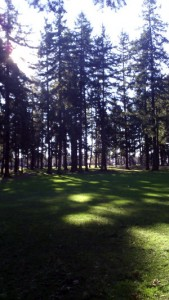 sun through fir trees at Mt. Scott Park, with green lawn