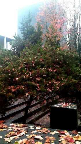 pine strewn with fallen oak leaves