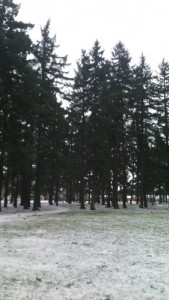 fir trees at Mt. Scott Park with snow on the ground